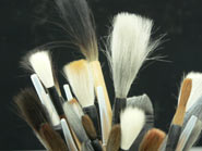 Shop Brushes How to take care of your brushes